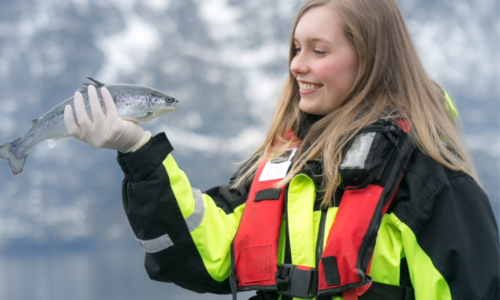 Woman working with Salmon